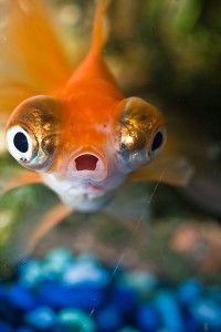 Surprise_poisson